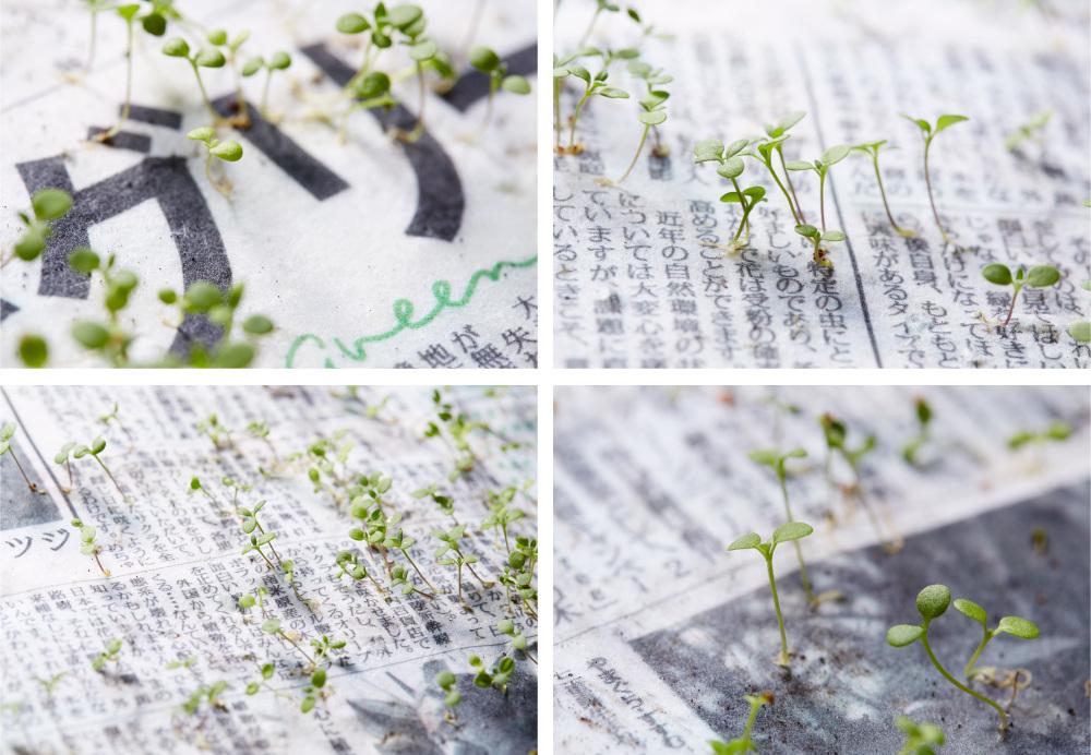 doğaya karışabilen gazeteler