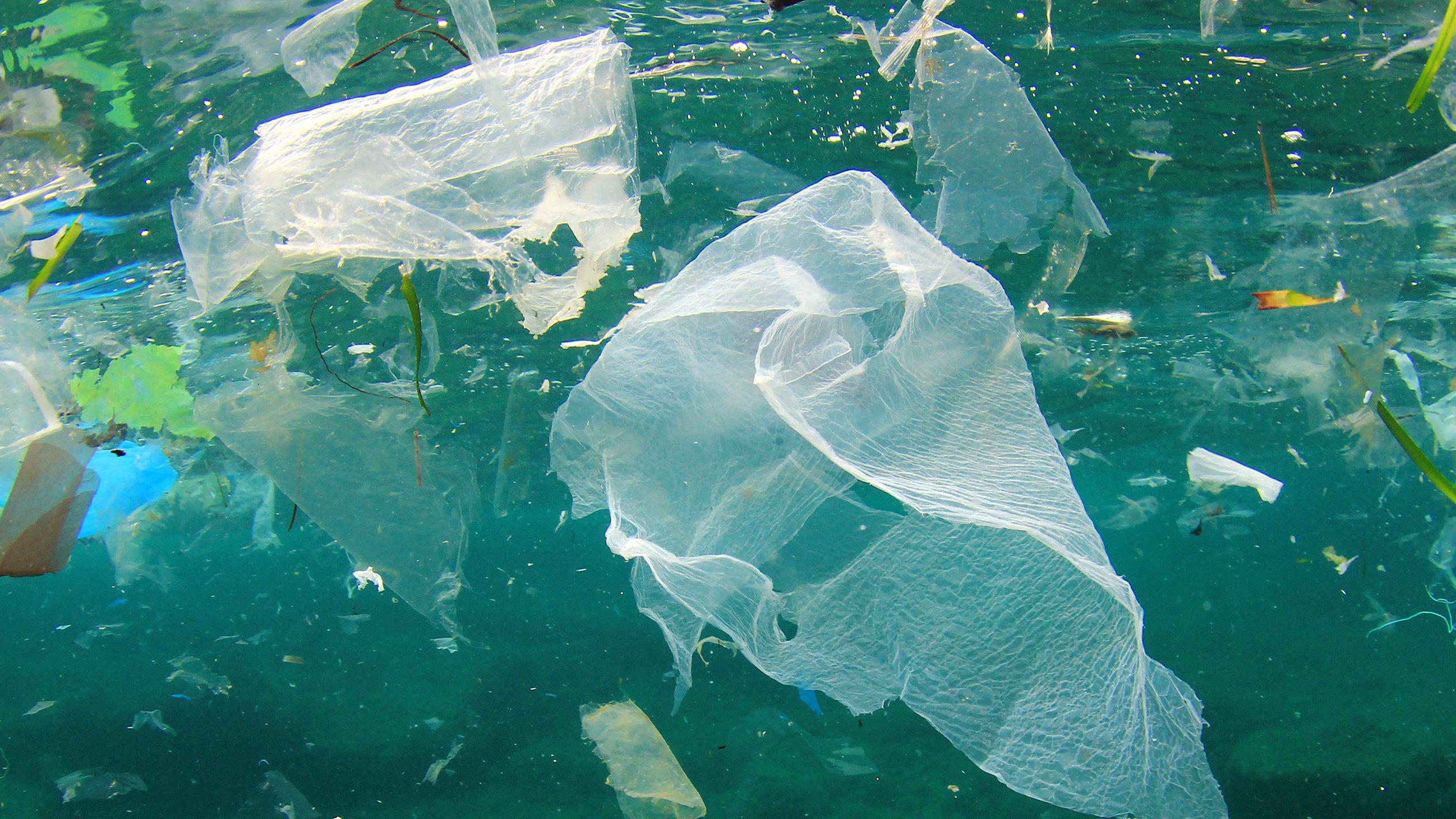 plastik şişeyi