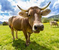 et ve süt ürünleri