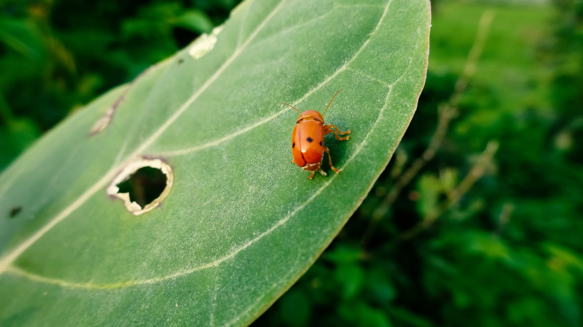 böceklerde mikroplastik